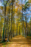 Autumn forest scenery with rays of sun on foliage and a footpath Royalty Free Stock Image