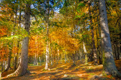 Autumn forest scenery with rays of sun on foliage and a footpath Stock Images