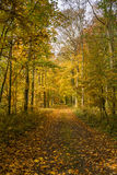 Autumn forest scenery with rays of warm light illumining the gold foliage and a footpath leading into the scene Stock Photo