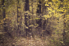 Autumn forest scenery Stock Image