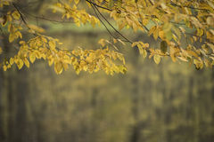 Autumn forest scenery Royalty Free Stock Image