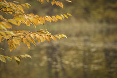 Autumn forest scenery Royalty Free Stock Photography