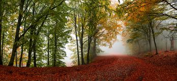 Autumn forest scenery. Vibrant colors of autumn have paint this picturesque forest scenery royalty free stock photo