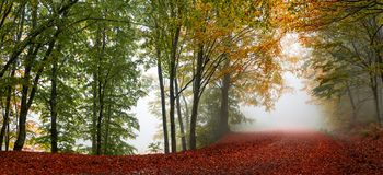 Autumn forest scenery. Vibrant colors of autumn have paint this picturesque forest scenery royalty free stock image