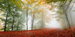 Autumn forest scenery. Vibrant colors of autumn have paint this picturesque forest scenery royalty free stock images