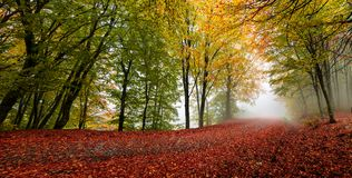 Autumn forest scenery. Vibrant colors of autumn have paint this picturesque forest scenery stock photography