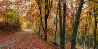 Autumn forest scenery. Vibrant colors of autumn have paint this picturesque forest scenery stock photo