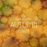 Autumn forest seamless pattern. With a picture of a fern. Black print on white background Royalty Free Stock Photos