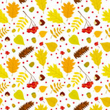 Autumn forest seamless pattern with rowan berries, leaves, acorn, chestnut, pine cone. Vector set. Stock Images