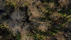 Autumn forest seen from above. stock footage