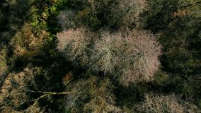 Autumn forest seen from above. stock video