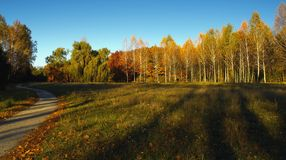 Autumn forest, setting sun illuminates yellow trees, the shadows from which fall on a meadow with yellow grass, to the left stretc Royalty Free Stock Photo