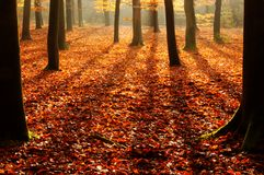 Autumn forest shadows Royalty Free Stock Image