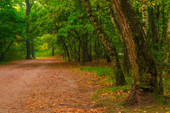 Autumn forest, shot in the morning Stock Photos