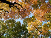 Autumn forest and sky stock photography