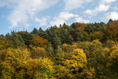 Autumn forest on the sky background. In Ojcowski National Park (Poland Stock Image
