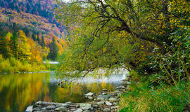 Autumn forest and sky and mountains and river. Autumn forest and blue sky and mountains and river Royalty Free Stock Image