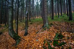 Autumn forest on the slopes of the Krkonose Mountains royalty free stock photos