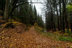 Autumn forest on the slopes of the Krkonose Mountains stock image