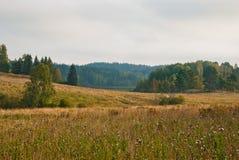 Autumn forest in South Karelia. Scandinavian landscape. Autumn forest in South Karelia Royalty Free Stock Image