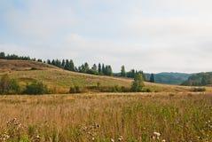 Autumn forest in South Karelia. Scandinavian landscape. Autumn forest in South Karelia Royalty Free Stock Photos