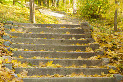 Autumn forest stone stairs. Stone stairs covered with autumn leaves in ancient park Stock Photos