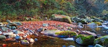 Autumn forest stream Stock Photos