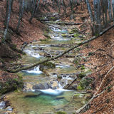 Autumn forest stream Stock Images