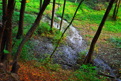 Autumn forest and stream Stock Photos
