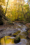 Autumn forest stream. Colourful autumn forest with stream Stock Image