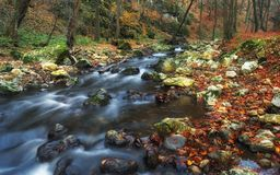 Autumn forest stream Stock Photos