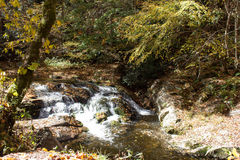 Autumn Forest Stream Royalty Free Stock Photography