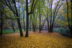 Autumn forest. Stream flowing through autumn forest Stock Photo