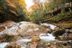 Autumn,forest and stream. Guang wu shan,sichuan,china Royalty Free Stock Images