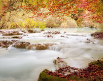 Autumn forest and stream river, fall season Royalty Free Stock Photos