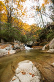 Autumn,forest and stream. Sichuan,china Stock Photography