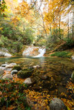 Autumn,forest and stream. Sichuan,china Royalty Free Stock Photography