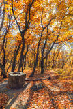 Autumn forest strewn with fallen leaves. Royalty Free Stock Photography