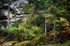 Autumn Forest sul pendio di montagna Fotografia Stock Libera da Diritti