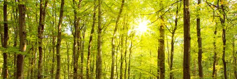 Autumn forest with sun beam. Stock Images