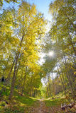 Autumn forest. Sun in autumn forest and path Stock Images