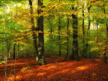 Autumn forest - sun rays Royalty Free Stock Photography