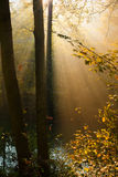 Autumn forest sun rays Stock Photos