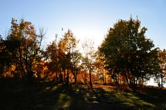 Autumn forest in the sun, sun rays pierce through the foliage of trees Royalty Free Stock Photo