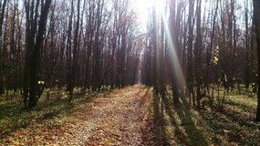 In the autumn forest, the sun`s rays fall on a path covered with leaves stock photo