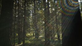 Autumn forest with sun shining. Beautiful autumn forest with sun shining, autumn background stock footage