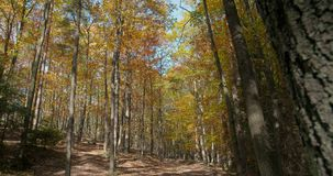 Autumn forest with sun shining. Beautiful autumn forest with sun shining, autumn background stock video footage