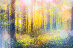 Autumn forest in sunlight with bokeh Royalty Free Stock Images