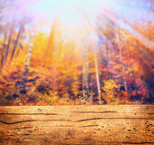 Autumn forest in sunlight and wooden table , nature background Royalty Free Stock Image