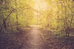 Autumn forest on a sunny day Stock Images
